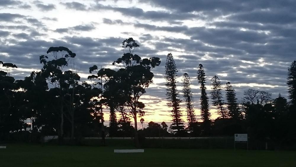 field at dusk
