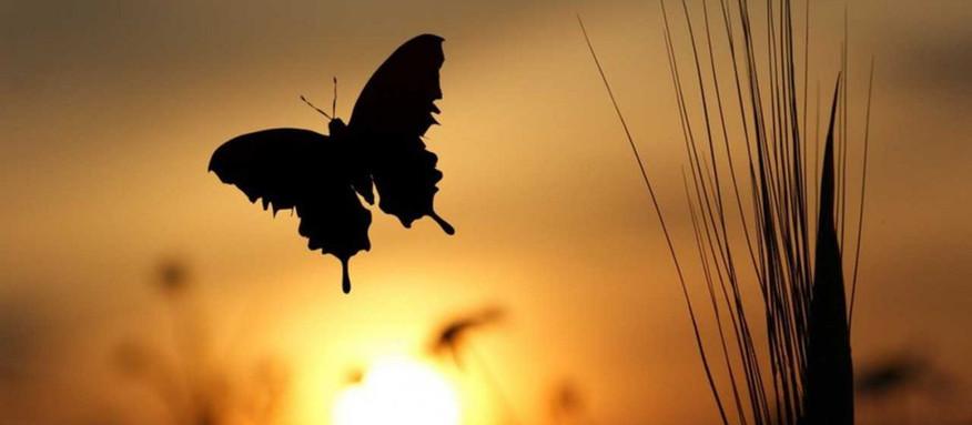 Beyond the Rhetoric of Transformation