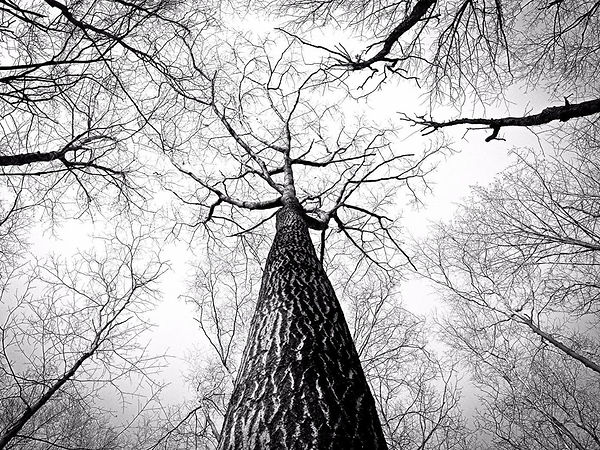 free-stock-photo-of-black-and-white-bran