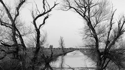 The Yolo Wetlands