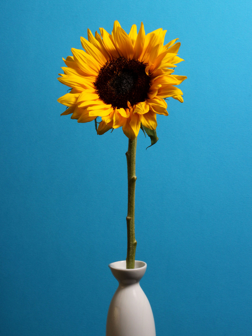 Sunflower, 2018