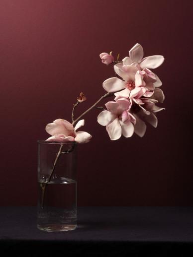 Magnolias, 2018