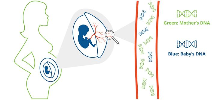 تحليل الجنين من دم الأم و معرفة جنس الجنين