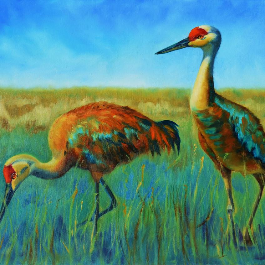 Sand Hill cranes  oil  30 x 24 005