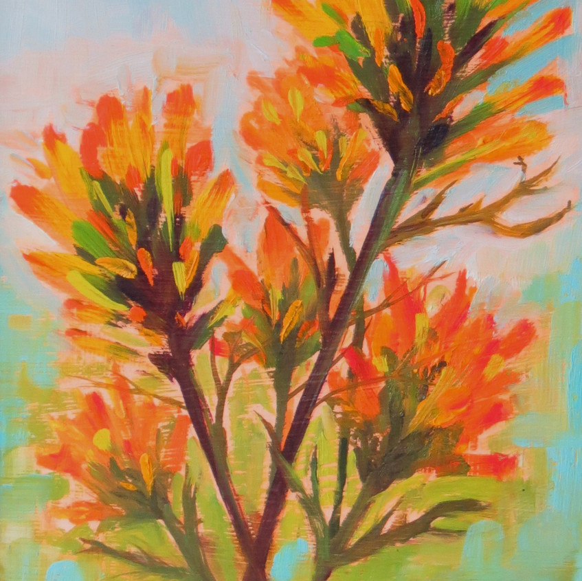 Indian Paint Brush - 2