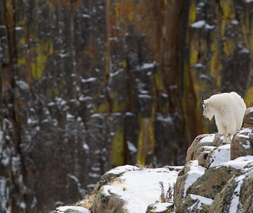Winter Above Clarks Fork by Scott C