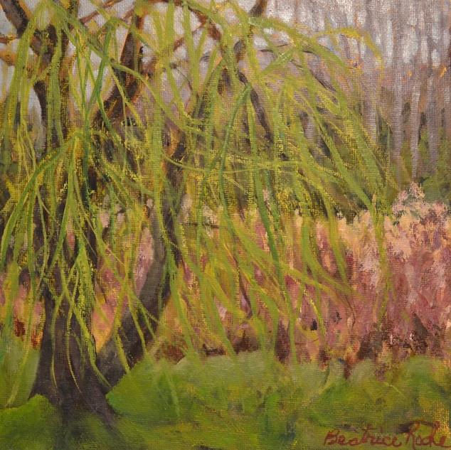 Awakening Weeping Willow