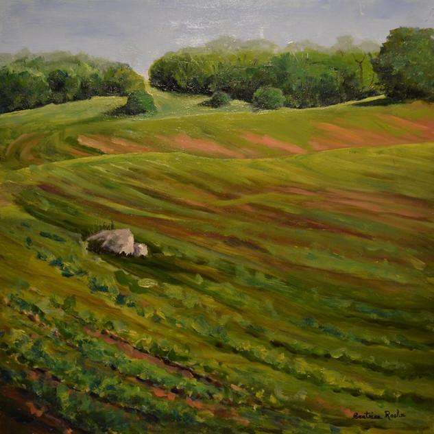 The Farmer's Bean Field