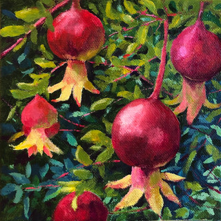 Pomegranates in Val d'Orcia Gardens