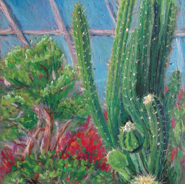 Cactus at Allan Garden's Greenhouse