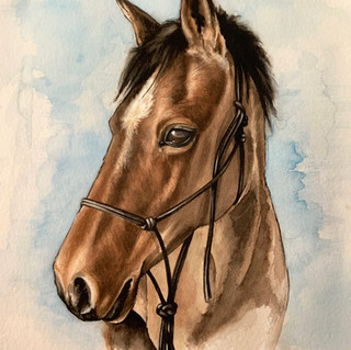 Lady the pony