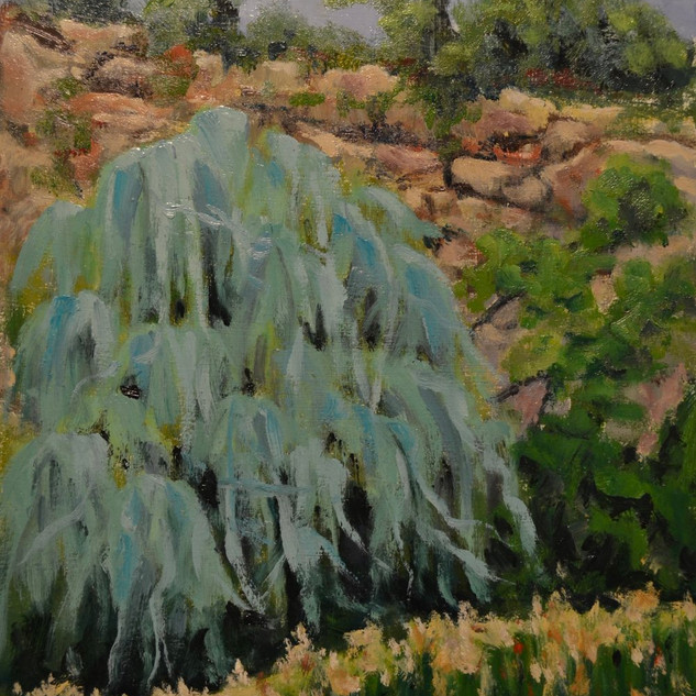 Weeping Willow #2