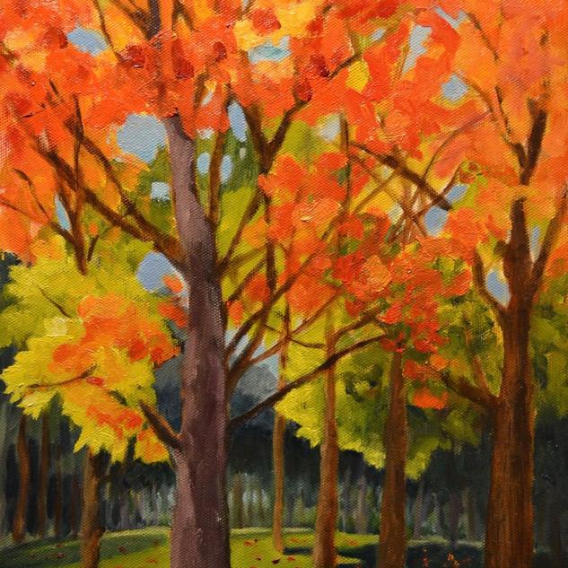 Autumn in Hugh Park