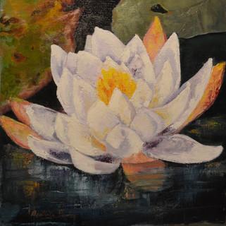 Lily Zen