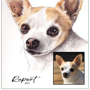 Rupert the Chihuahua mix