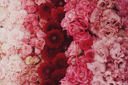 ombre of pink red flowers