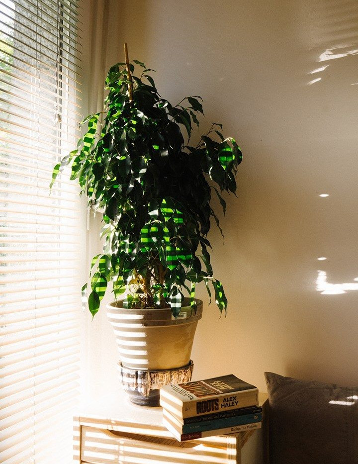 Cortina de madera en ventana