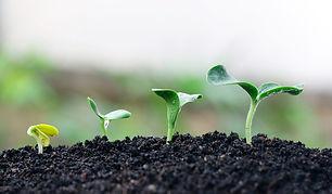 plantar-diiscipular.jpg