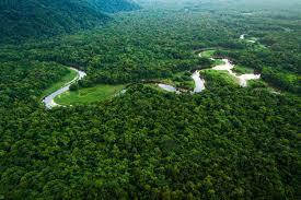 Programa de captação de recursos visa preservação da Amazônia