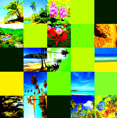 Caribbean Influence Number Eight