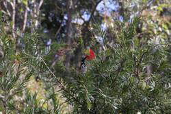bush walk walpole