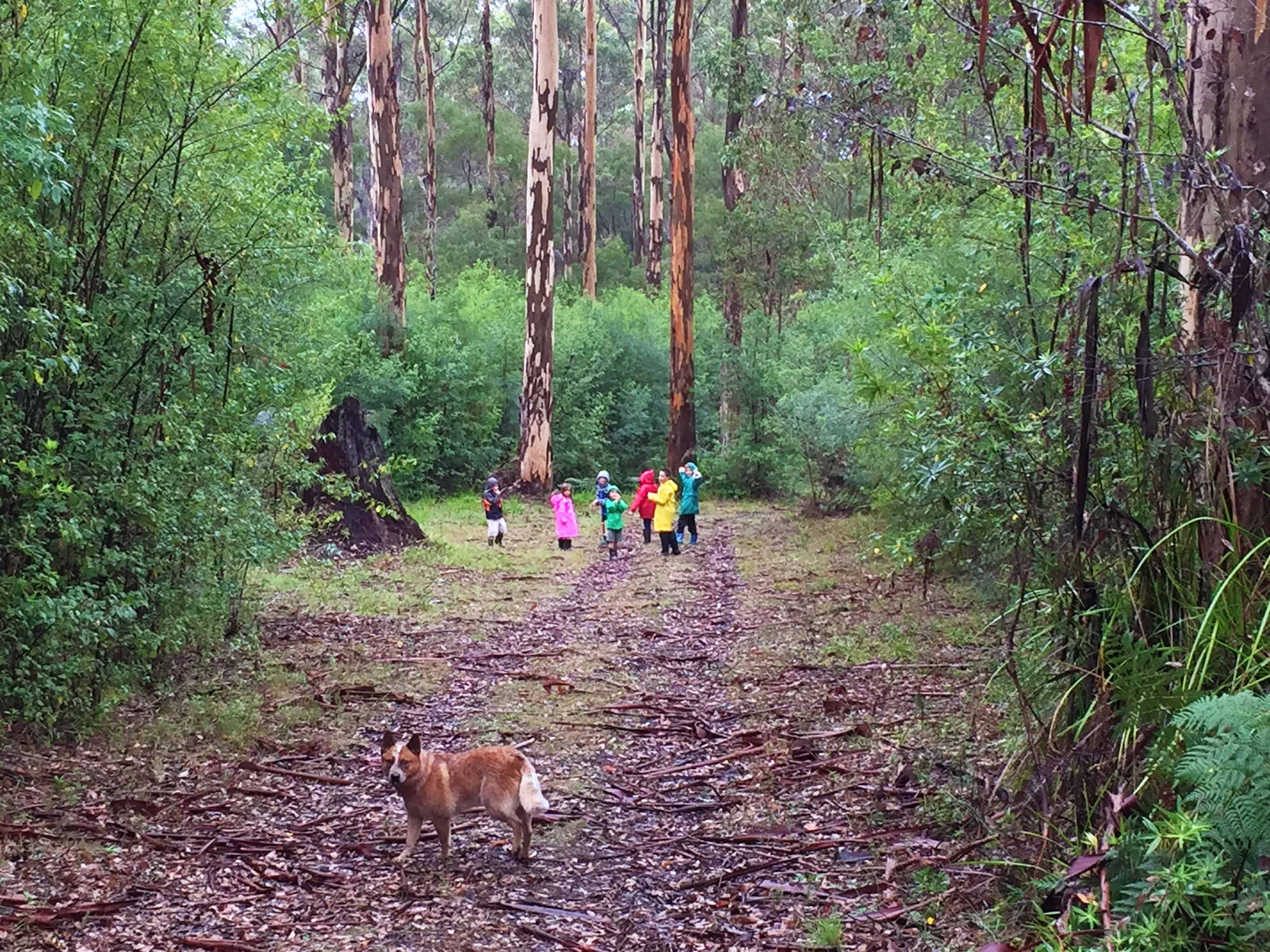 bush walk walpole
