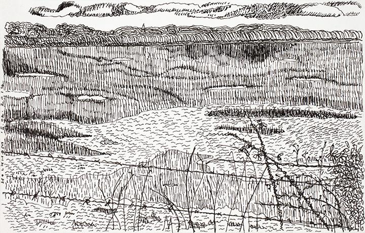 Holkham's Marshes