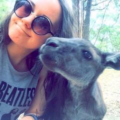Pet Kangaroos