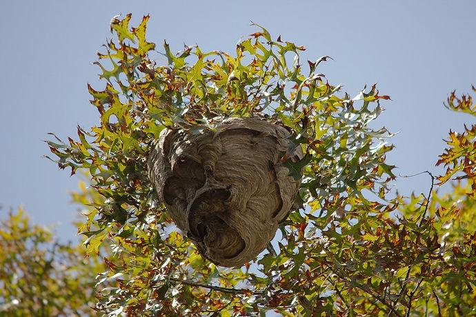 nest-2698523_1280.jpg