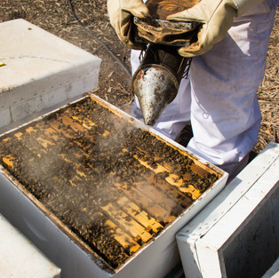 Is a pollination crisis looming for almond growers?