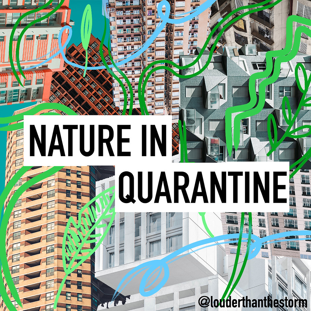 buildings nature graphic design windows houses