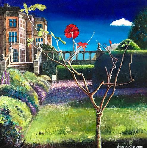 'The Solitary Rose - Fabulous Fanhams'