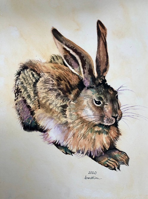 Homage to Durer's Young Hare