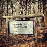 state forest.jpg
