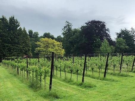 Sur la route des vins de Wallonie