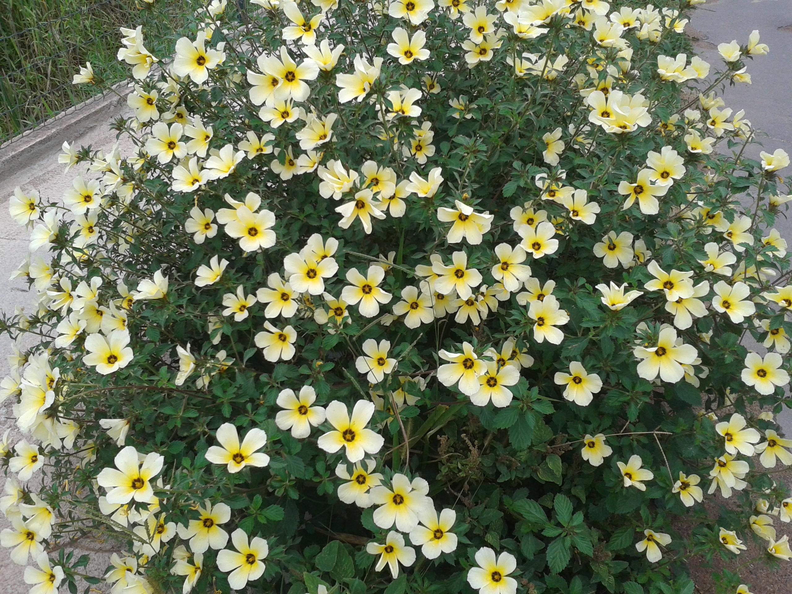 Buquê de Flores Natural.