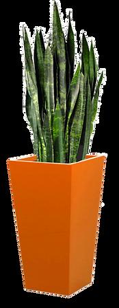 Orange Planter Display