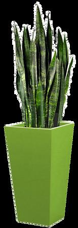 Green Planter Display