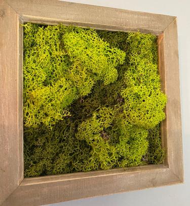 Natural Preserved Moss Art