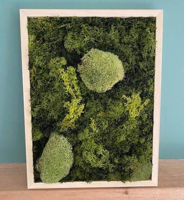 Natural Preserved Spring Moss Art