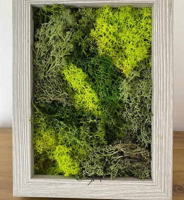 Natural Preserved Moss Desk Top Art