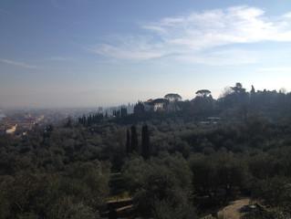 Olive grove awakenings