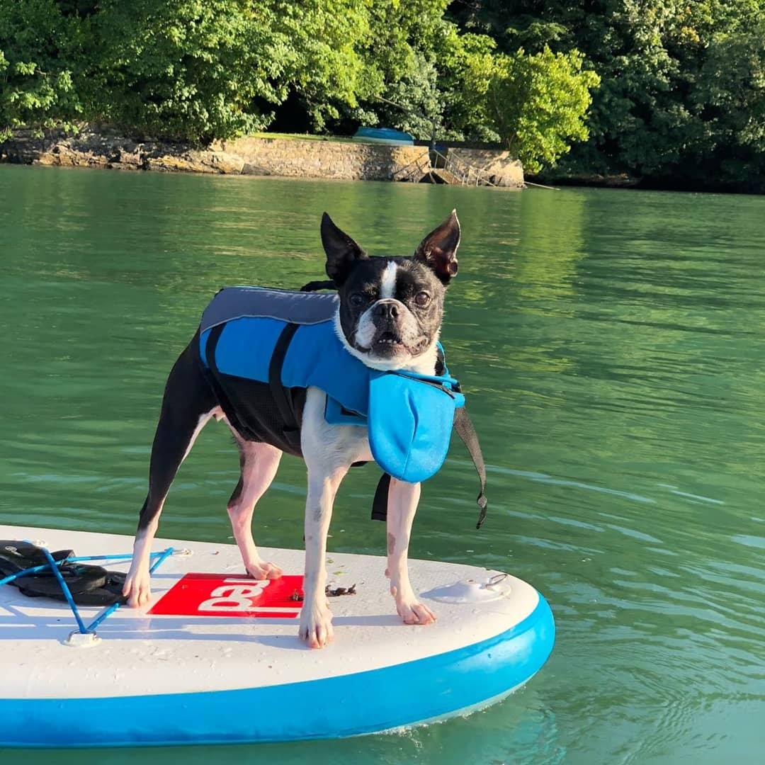 Doggy 🐾 Paddle