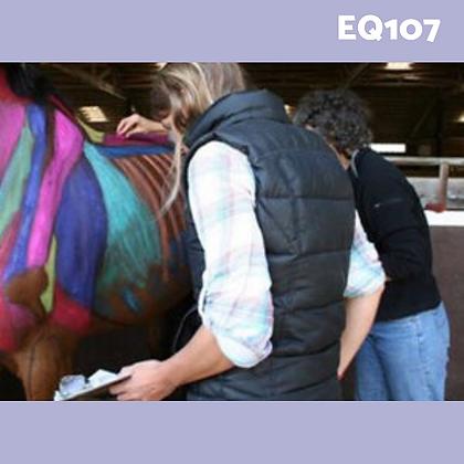 EQ107: Equinology® EEBW Externship Camp