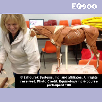 EQ900: Anatomy Discovery Workshop Clay & Hands On