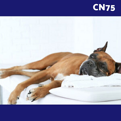 CN75: Caninology® Canine Body Work for Owners & Trainers