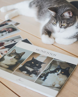PHOTOBOOK PET FRIENDLY
