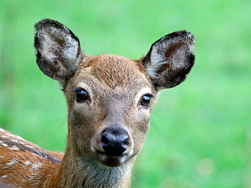 Inquisitive Doe