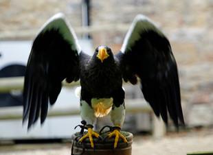 A Seriously Big Bird