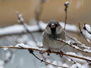 The Big Garden Bird Watch